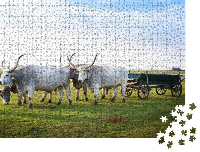 """Puzzle 1000 Teile """"Hortobagy National Park, Ungarn"""""""