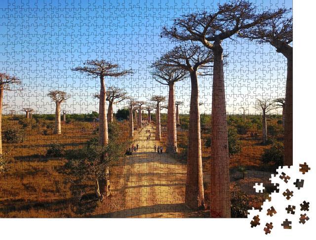 """Puzzle 1000 Teile """"Madagaskar's Baobabs,Luftaufnahmen,Morondava Region,Baobabs Schöne Aussicht"""""""