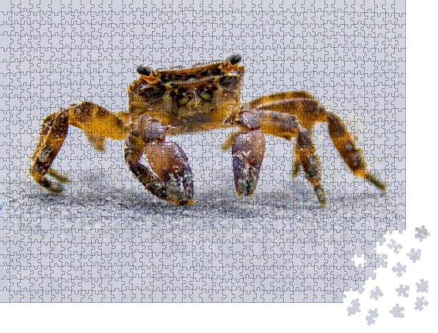 """Puzzle 1000 Teile """"Strandkrabbe beim Spaziergang am Meer"""""""
