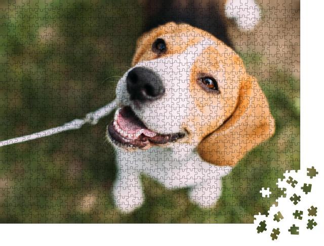 """Puzzle 1000 Teile """"Tricolor: Beagle-Welpe auf dem Gras"""""""