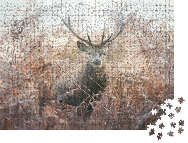 """Puzzle 1000 Teile """"Porträt eines Rothirsches an einem nebligen Herbstmorgen"""""""