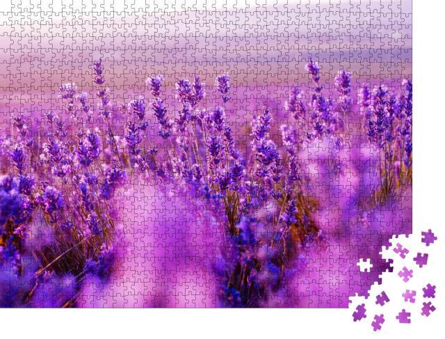 """Puzzle 1000 Teile """"Wunderschönes Lavendelfeld im Sommer"""""""