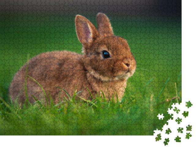 """Puzzle 1000 Teile """"Baby-Kaninchen auf grünem Gras"""""""