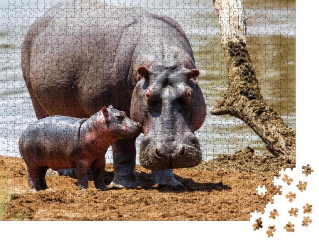 """Puzzle 1000 Teile """"Nilpferdmutter mit ihrem Baby im Masai Mara National Park, Kenia"""""""
