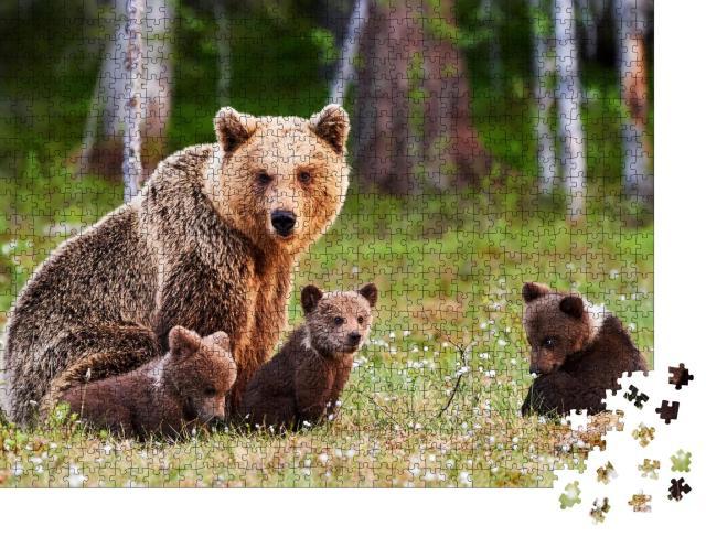 """Puzzle 1000 Teile """"Braunbärenmutter beschützt ihre Jungen in einem finnischen Wald"""""""