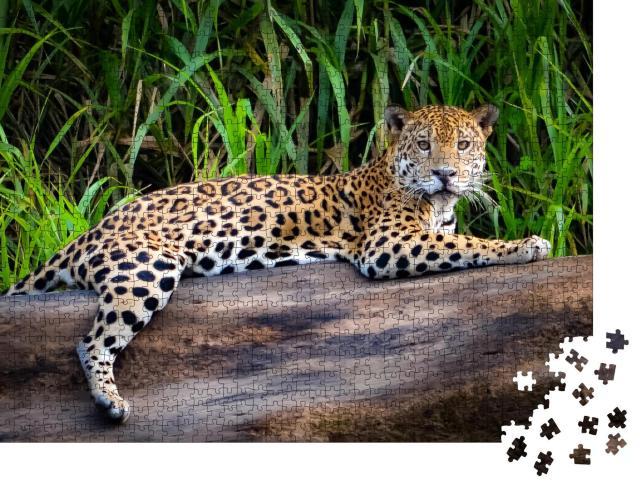 """Puzzle 1000 Teile """"Ein Jaguar im peruanischen Amazonasgebiet"""""""