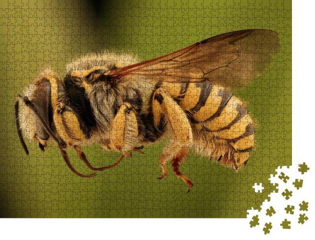 """Puzzle 1000 Teile """"Makroaufnahme: fliegende Biene von der Seite"""""""