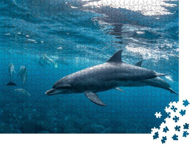 """Puzzle 1000 Teile """"Delfine auf dem Mikurajima in Tokio, Japan"""""""