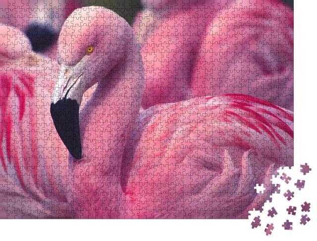 """Puzzle 1000 Teile """"Flamingo aus Chile """""""