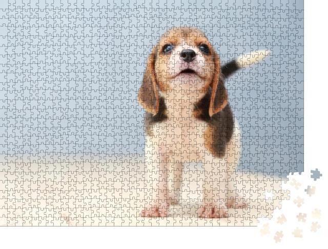 """Puzzle 1000 Teile """"Kleiner niedlicher Beagle-Welpe, Hund schaut auf"""""""