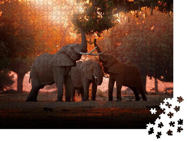 """Puzzle 1000 Teile """"Elefant beim Fressen im Mana Pools Nationalpark, Simbabwe"""""""