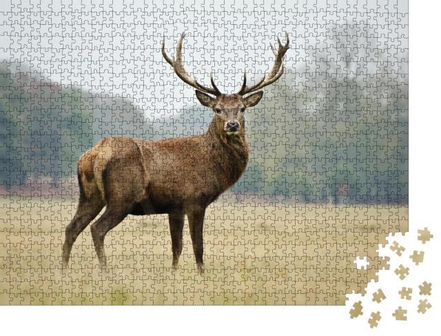 """Puzzle 1000 Teile """"Porträt eines stolzen Rothirsches im herbstlichen Wald"""""""