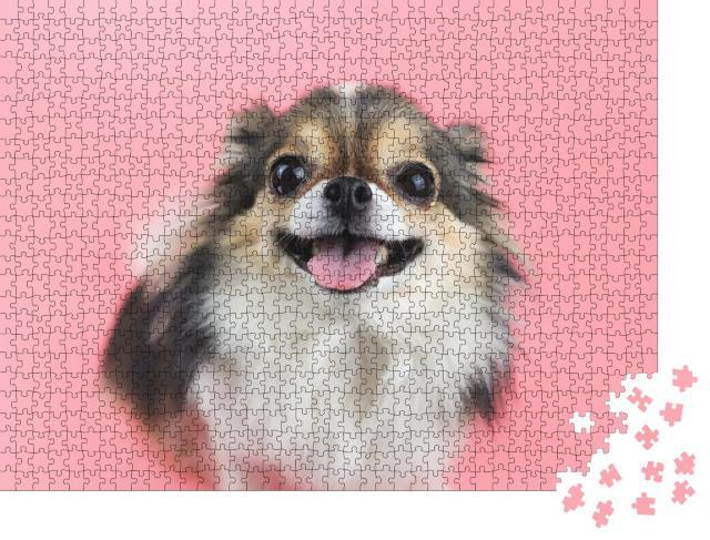 """Puzzle 1000 Teile """"Nahaufnahme: Chihuahua mit langen Haaren und rosa Zunge"""""""