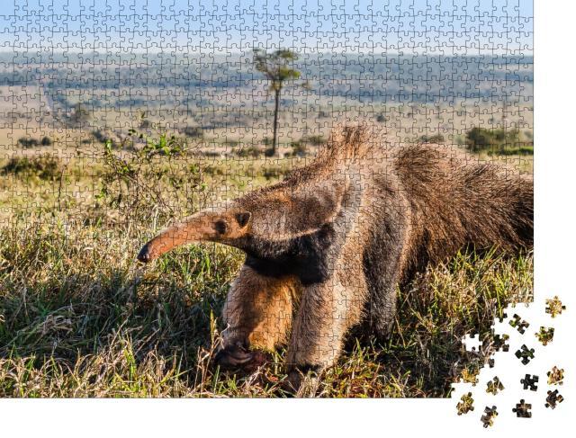 """Puzzle 1000 Teile """"Ein wilder Riesenameisenbär auf der Weide"""""""