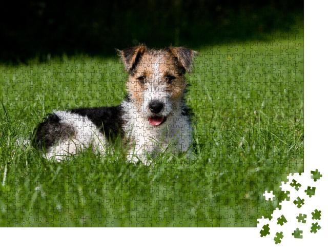 "Puzzle 1000 Teile ""Drahthaar Foxterrier-Welpe im Gras"""