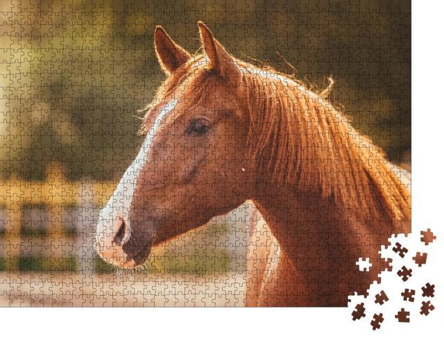 """Puzzle 1000 Teile """"Porträt eines Pferdes im Abendlicht"""""""