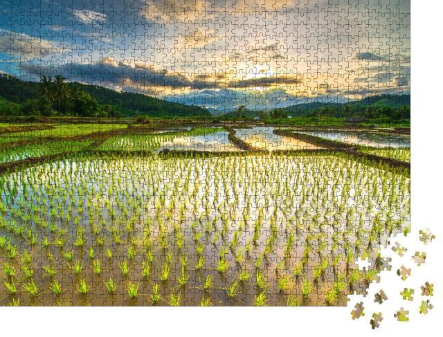 """Puzzle 1000 Teile """"Schöne Reisfelder"""""""
