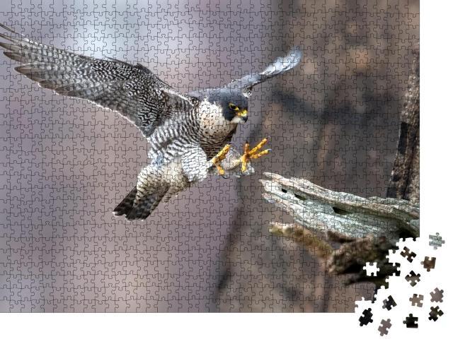"""Puzzle 1000 Teile """"Wanderfalke im perfekten Landeanflug"""""""