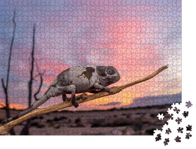 """Puzzle 1000 Teile """"Gewöhnliches Chamäleon bei Sonnenuntergang, Spanien"""""""