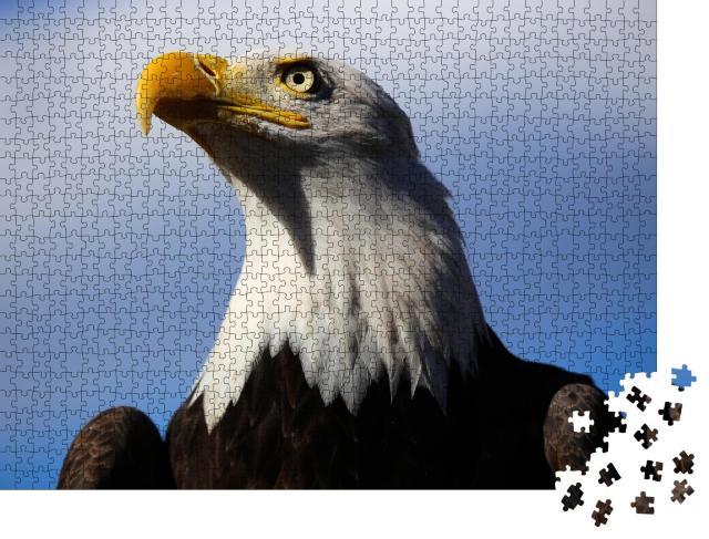 """Puzzle 1000 Teile """"Weißkopfseeadler mit blauem Himmel"""""""