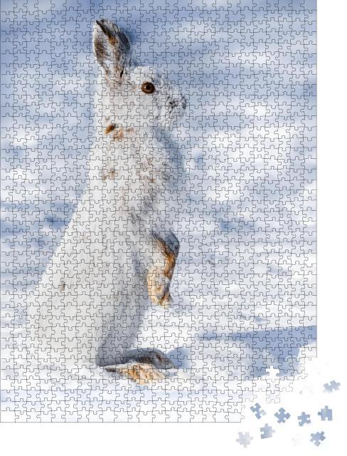 """Puzzle 1000 Teile """"Aufmerkamer Schneehase im Schnee"""""""