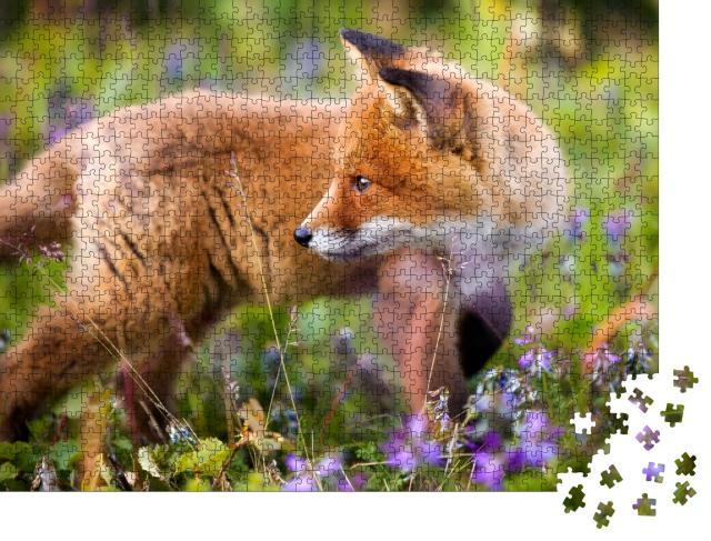 """Puzzle 1000 Teile """"Neugieriges Rotfuchsjunges in einer Blumenwiese"""""""