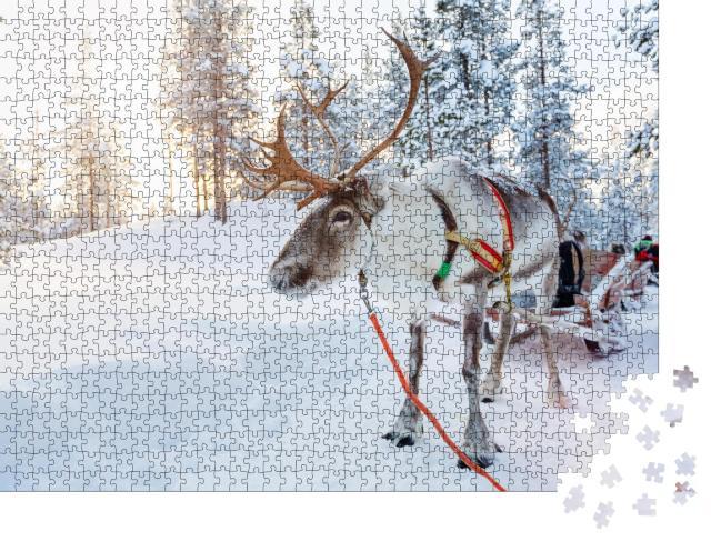 """Puzzle 1000 Teile """"Rentiere in einem Winterwald in Finnisch-Lappland"""""""