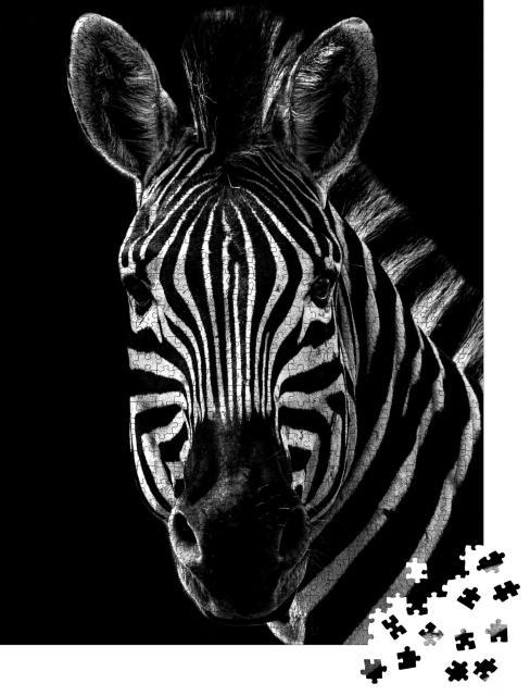 """Puzzle 1000 Teile """"Portrait eines Zebras, schwarz-weiß"""""""
