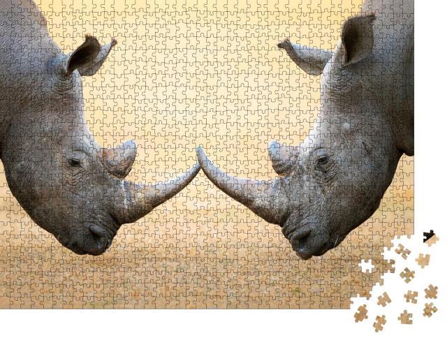 """Puzzle 1000 Teile """"Breitmaulnashörner, Kopf an Kopf - Kruger National Park, Südafrika"""""""