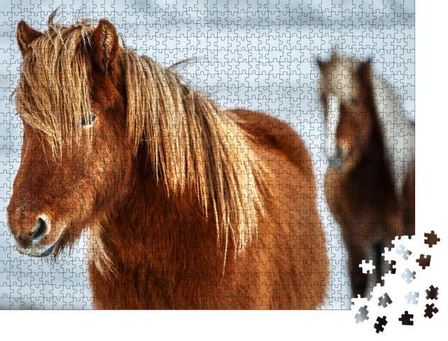 """Puzzle 1000 Teile """"Porträt eines schönen Islandpferdes, im Hintergrund ein weiteres Pferd"""""""