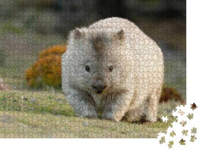 """Puzzle 1000 Teile """"Australischer Wombat, auch bekannt als Grobhaariger oder Nacktnasenbär"""""""