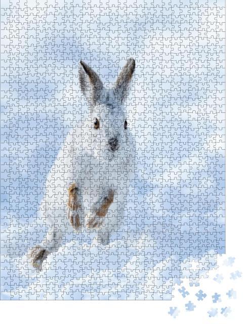 """Puzzle 1000 Teile """"Weißer Schneeshase beim Springen durch den Schnee"""""""