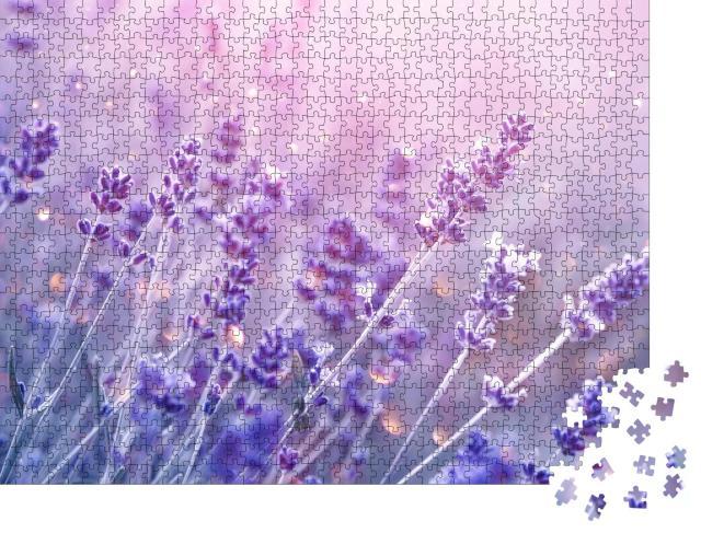 """Puzzle 1000 Teile """"Blühender Lavendel im sanften Abendlicht"""""""