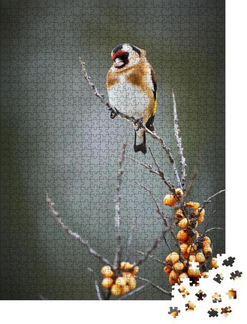 """Puzzle 1000 Teile """"Der Stieglitz, ein Singvogel"""""""