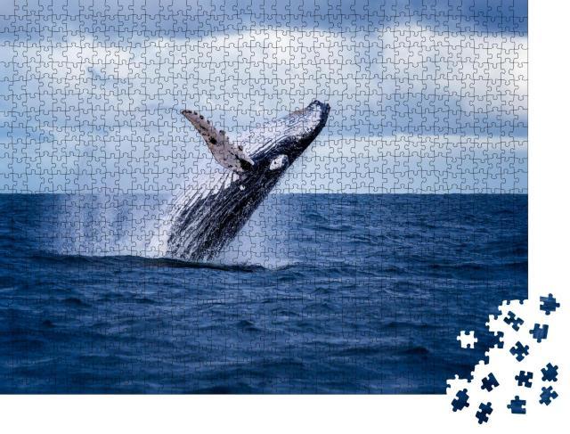 """Puzzle 1000 Teile """"Buckelwal springt aus dem Wasser und sprüht es umher, Australien"""""""