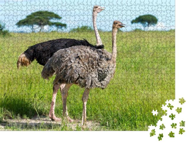 """Puzzle 1000 Teile """"Paar Strauße in Tansania, Afrika"""""""