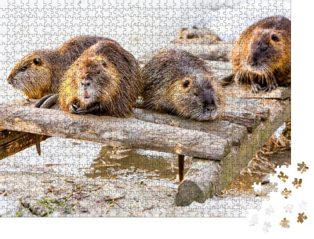 """Puzzle 1000 Teile """"Biberfamilie macht eine Pause"""""""