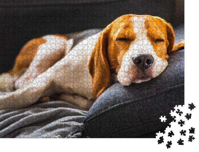 """Puzzle 1000 Teile """"Liebenswerter Beagle auf dem Sofa, Hund"""""""