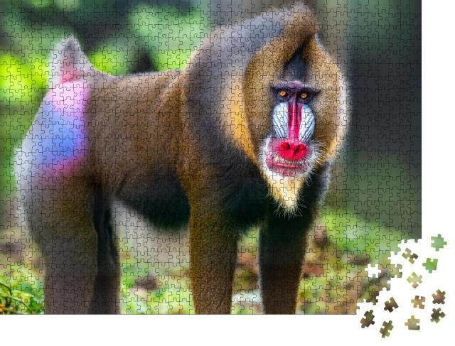 """Puzzle 1000 Teile """"Portraitaufnahme von Mandrill, bekannte Affen"""""""
