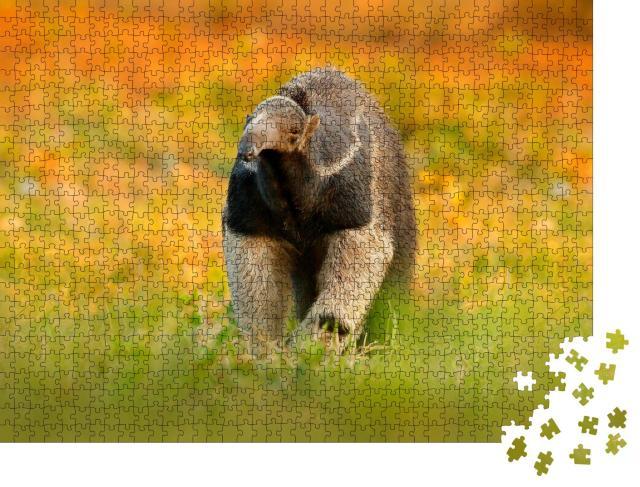 """Puzzle 1000 Teile """"Ameisenbär, niedliches Tier aus Brasilien"""""""