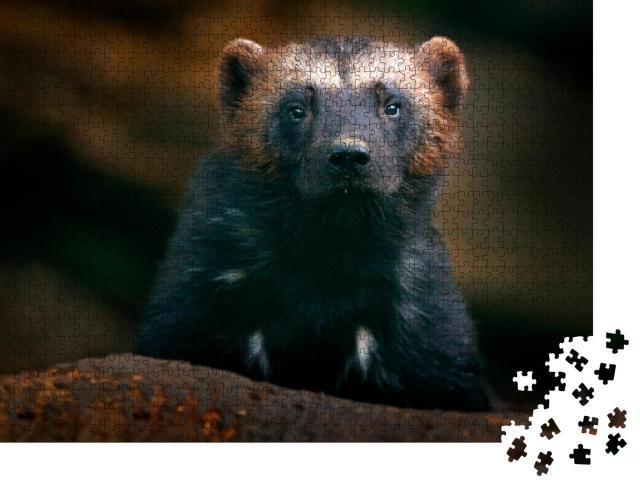 """Puzzle 1000 Teile """"Vielfraß-Porträt: Detail-Nahaufnahme eines wilden Tieres in der finnischen Taiga"""""""