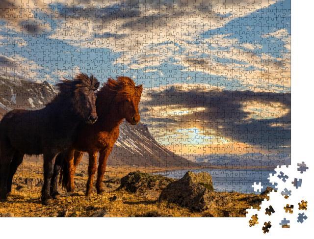 """Puzzle 1000 Teile """"Zwei Island-Pferde an der Küste im Sonnenuntergang"""""""