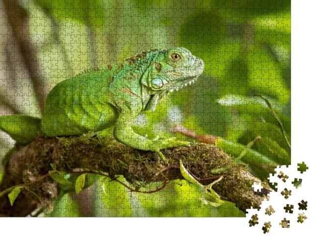 """Puzzle 1000 Teile """"Der Grüne Leguan, auch Amerikanischer Leguan genannt"""""""
