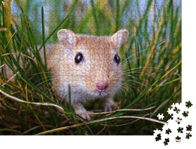 """Puzzle 1000 Teile """"Kleine Rennmaus im Gras"""""""