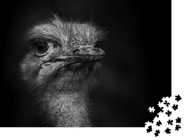 """Puzzle 1000 Teile """"Aufnahme eines Straußenkopfes vor einem dunklen Hintergrund"""""""