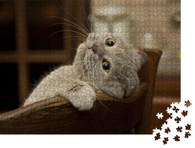 """Puzzle 1000 Teile """"Kleine verspielte Katze"""""""