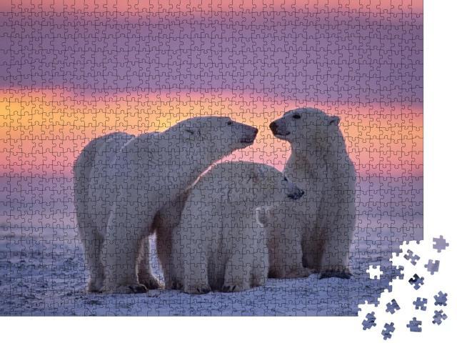 """Puzzle 1000 Teile """"Eisbärenfamilie im Sonnenuntergang in der kanadischen Arktis."""""""