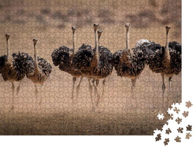 """Puzzle 1000 Teile """"Straußenweibchen wirbeln Staub auf, Paarungszeit in den Kgalagadi"""""""