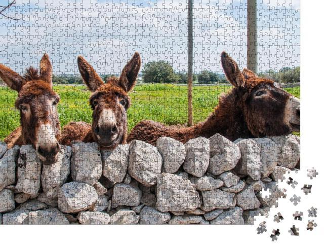 """Puzzle 1000 Teile """"Niedliche Esel blicken durch eine Steinmauer, Modica"""""""