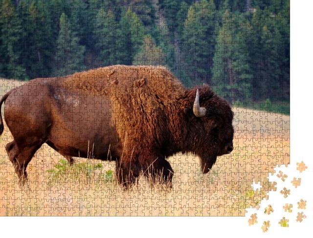 """Puzzle 1000 Teile """"Amerikanischer Bison am frühen Morgen, Montana"""""""